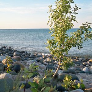 Beach Tree <3